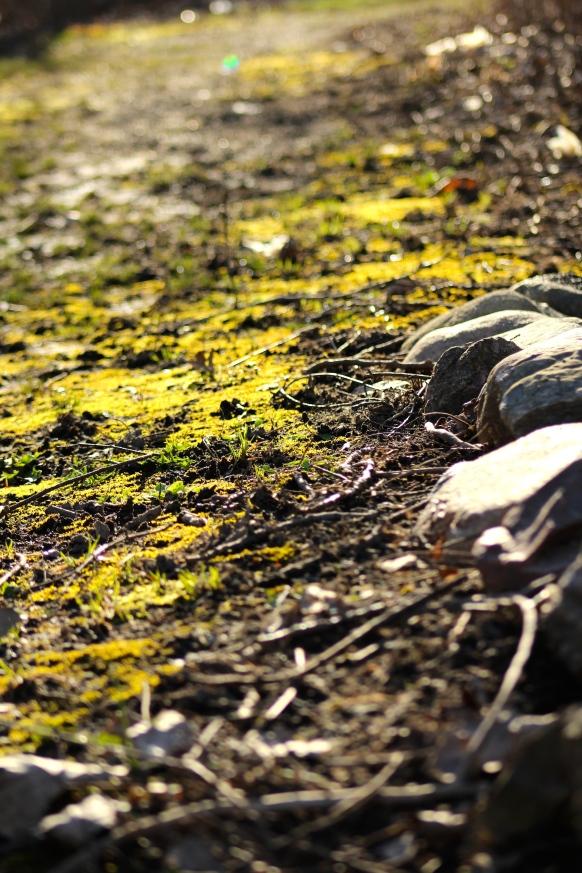 muddy moss path